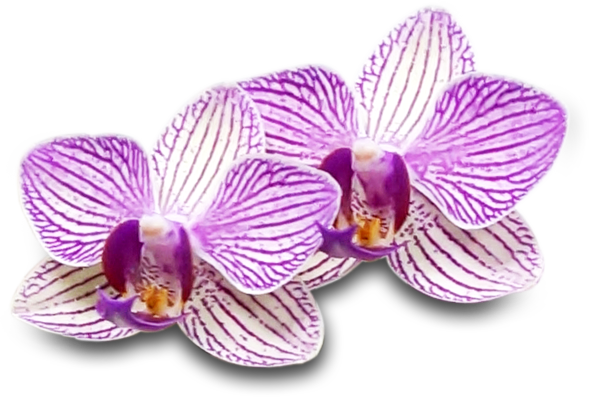 orchid-hr-02