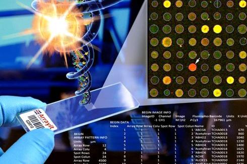 基因微矩陣<br />蝴蝶蘭晶片技術