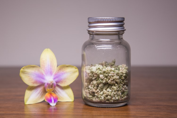 Orchid-Embryonin-04